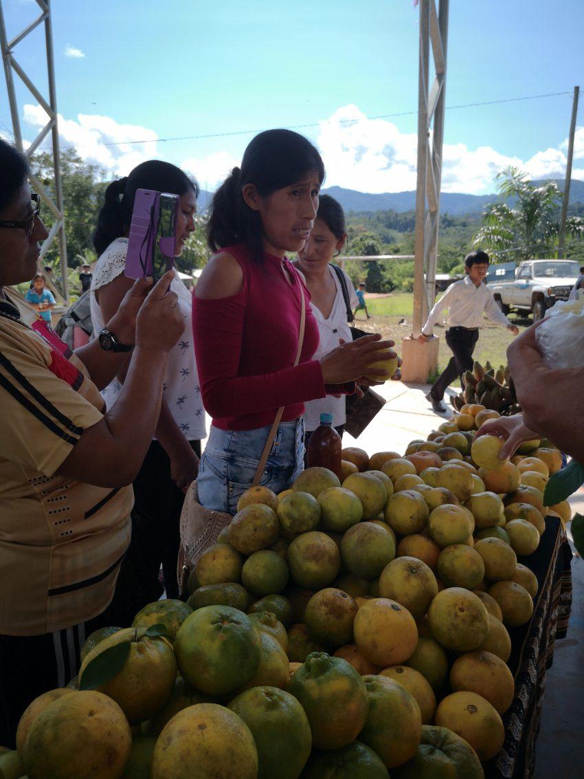 Feria – Alto Beni